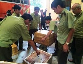 Bắt xe khách vận chuyển động vật và nội tạng phân hủy ra Hà Nội