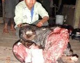 """Quảng Bình: Tóm """"sơn tặc"""" dùng chó săn lùng bắt động vật quý"""