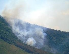 Rừng thông cháy lớn giữa nắng nóng 40 độ C
