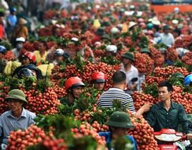 """Vải thiều Việt Nam chính thức """"đổ bộ"""" vào Úc"""