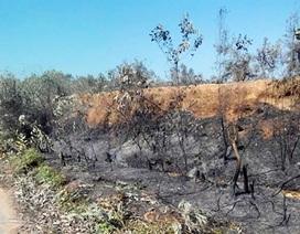 Hơn 1.000 người dập cháy rừng đặc dụng ở Sóc Sơn