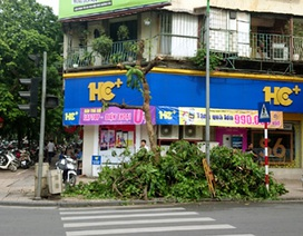 """Cây xanh bị """"bức tử"""" trên phố Hàng Bài"""