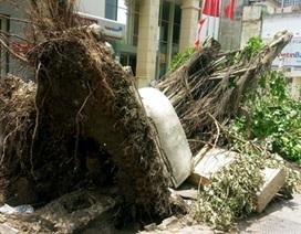 Hà Nội ngổn ngang gỗ và cây