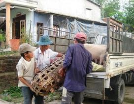Vùng đệm dịch heo tai xanh được buôn bán thịt heo
