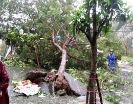 """Bí thư Đà Nẵng """"thắc mắc"""" vì sao 95% cây xanh đổ trong bão"""