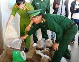 Bàn giao 65 kg động vật hoang dã cho Trung tâm bảo tồn VQG Cúc Phương