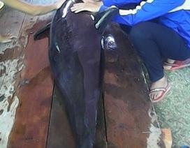 Cá Ông nặng 1 tạ bất ngờ trôi dạt vào bờ biển