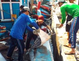 Hơn 1.500 tỷ đồng xây Trung tâm nghề cá đầu tiên trong cả nước