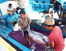 Việt Nam chỉ bằng 1/94 Nhật Bản về hiệu quả khai thác biển