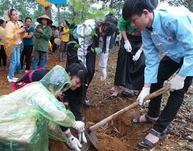 500 tình nguyện viên hồ hởi tham dự lễ phát động trồng rừng