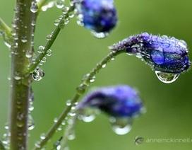 """Những """"tiểu xảo"""" giúp chụp ảnh hoa đẹp ngày xuân"""