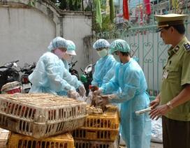 Hà Nội lên kế hoạch ngăn chặn dịch cúm H7N9