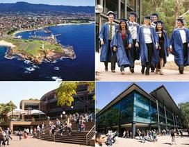 Cao đẳng Wollongong: Các chương trình Cao đẳng thiết thực và được ưa chuộng tại Úc