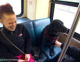 Gặp gỡ cô chó hằng ngày tự bắt xe bus đi chơi