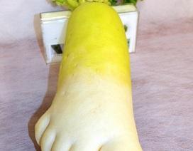 """Củ cải khổng lồ """"đội lốt"""" bàn chân người"""