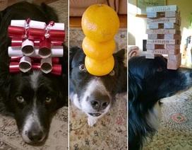 Hình ảnh đặc biệt về chú chó có biệt tài làm xiếc