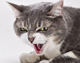 Cầu cứu 911 vì bị mèo nhốt không cho vào nhà