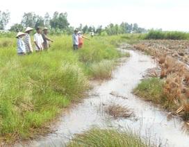 Đề nghị kỷ luật cán bộ đưa nước mặn vào ruộng dân