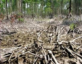 Cảnh cáo nguyên Giám đốc VQG để rừng bị chặt phá