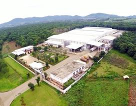 Trang trại TH true MILK đạt kỷ lục lớn nhất Châu Á