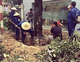 """8.800 người kí tên vào bức thư điện tử """"xin cứu"""" 6.700 cây xanh ở Hà Nội"""