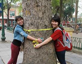 Giới trẻ Hà Nội tiếp tục rủ nhau thắt nơ lên cây xanh đường phố