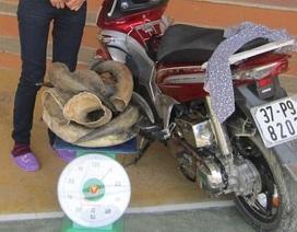Bắt phụ nữ vận chuyển 10kg nghi sừng bò tót