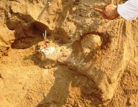 """Phát hiện bộ xương cá voi """"khủng"""" được chôn cất hàng trăm năm trước"""