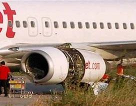 Ấn Độ: Máy bay đâm phải trâu, hành khách hú vía