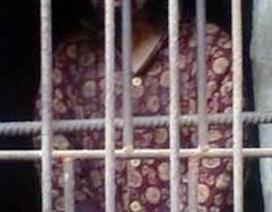 Trung Quốc: Mẹ 13 năm nhốt con trong chuồng gà
