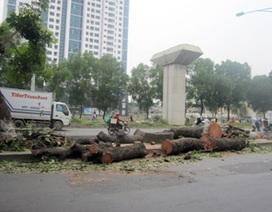 Chủ tịch Hà Nội yêu cầu rà soát việc chặt hạ 6.700 cây xanh