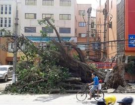 Chủ tịch Hà Nội yêu cầu đề phòng cây đổ, ngập úng do mưa bão