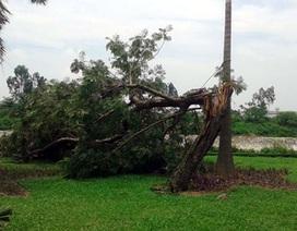 Hà Nội huy động 52 nghìn người ứng trực các trận siêu bão