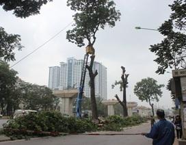 Hà Nội thừa nhận nóng vội trong việc chặt hạ cây xanh