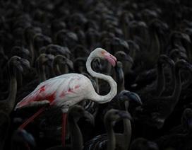 Những bức ảnh độc, đẹp nhất về thế giới động vật năm 2014