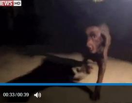 Chó cứu chủ khi hỏa hoạn