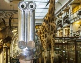 Nhìn thế giới qua con mắt động vật với chiếc mũ kỳ lạ