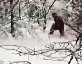 """Nga: Tìm thấy """"người tuyết Yeti"""" trong rừng"""
