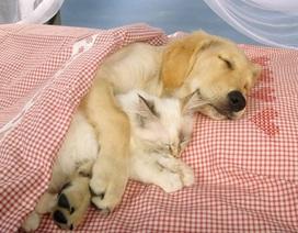Những bức hình đẹp về tình bạn chó mèo