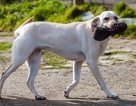 Chú chó thông minh cứu chủ khỏi nguy kịch vì nhiễm độc máu