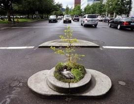 Công viên nhỏ nhất thế giới: Không lớn hơn cái chậu hoa!