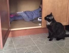 Clip vui: Mèo đóng cửa nhốt em bé trong tủ
