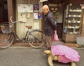 Rùa khổng lồ đi dạo trên đường phố Nhật Bản