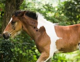 Gặp Da Vinci - chú ngựa mang trên lưng... hình ngựa