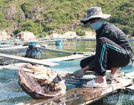 Hàng nghìn lít dầu loang dày đặc trên biển Quy Nhơn
