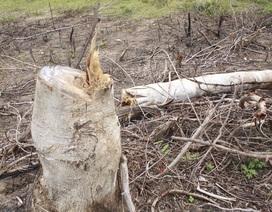 Yêu cầu làm rõ vụ việc dân phá rừng, chiếm đất