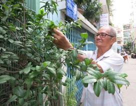 Cụ ông 74 tuổi vui vẻ sống với ung thư phổi
