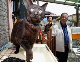 Mèo tái ngộ chủ sau 3 năm bị mất tích do sóng thần Nhật Bản