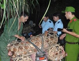 Lạng Sơn: Gia cầm lậu vẫn phức tạp