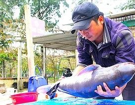 Cá voi dài gần 1m dạt vào bờ biển Nghệ An
